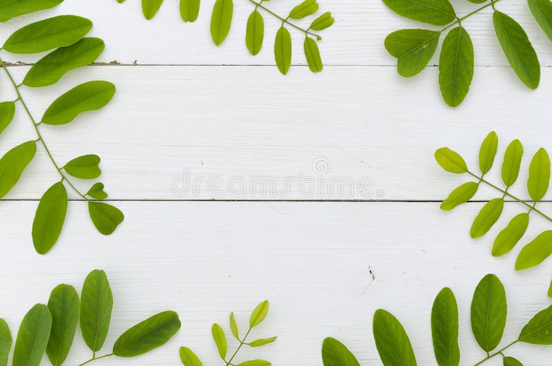 Fresh green leaves of acacia on white wooden background. Flat lay frame mockup royalty free stock photo