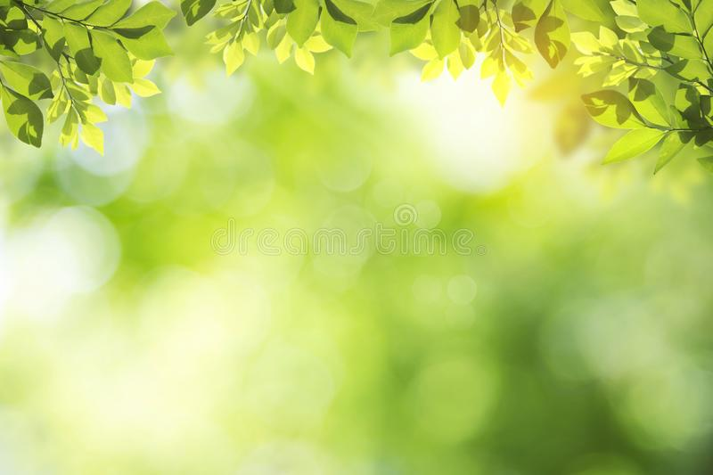 Fresh and green leaves green bokeh on nature abstract blur background green bokeh from tree.Mock up for display stock illustration