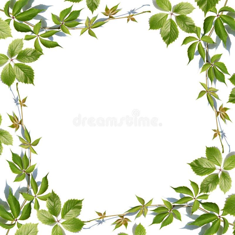 Leaf Border Png