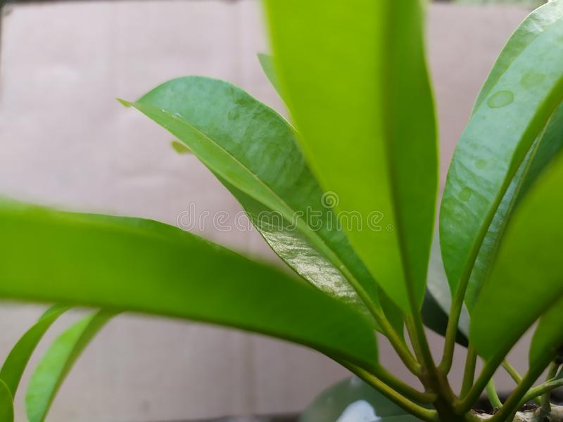 Fresh green leaves for business image. Simple photography royalty free stock images