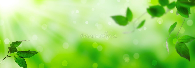 Fresh green leaves stock photos