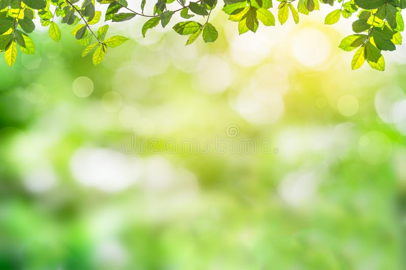 Fresh and green leaves green bokeh on nature abstract blur background green bokeh from tree.Mock up for display. royalty free illustration