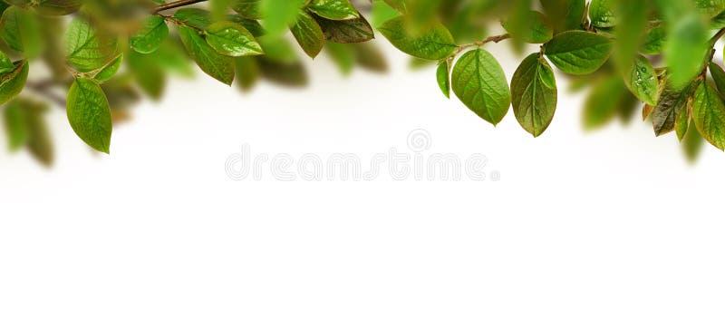 Fresh green leaves header stock photos