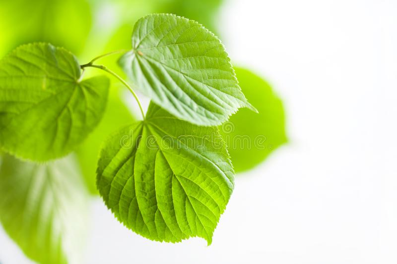 Fresh green leaves natural background stock images