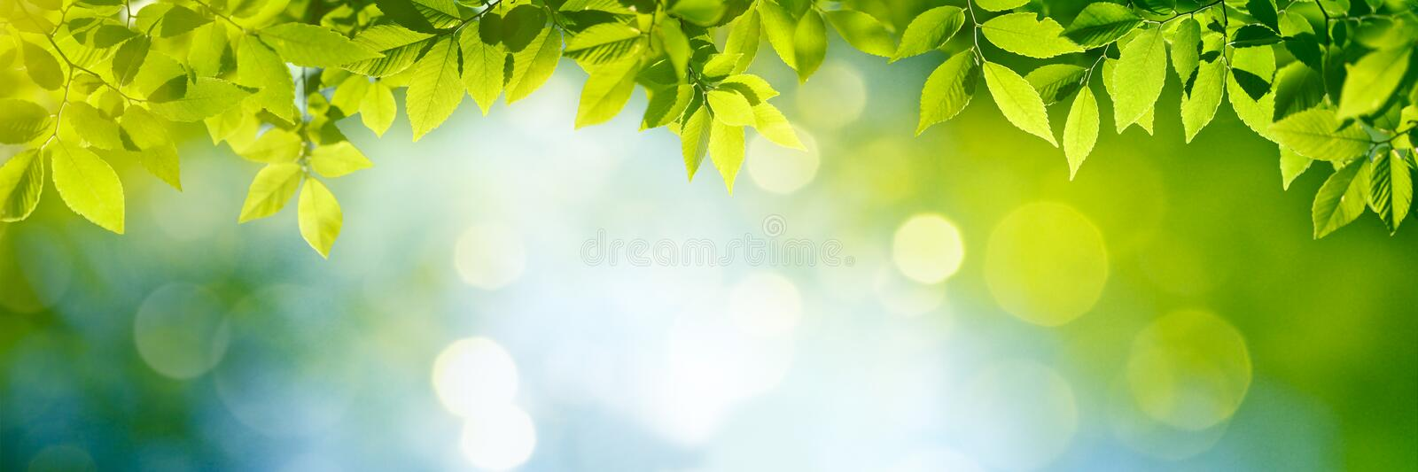 Fresh and green leaves royalty free stock photo
