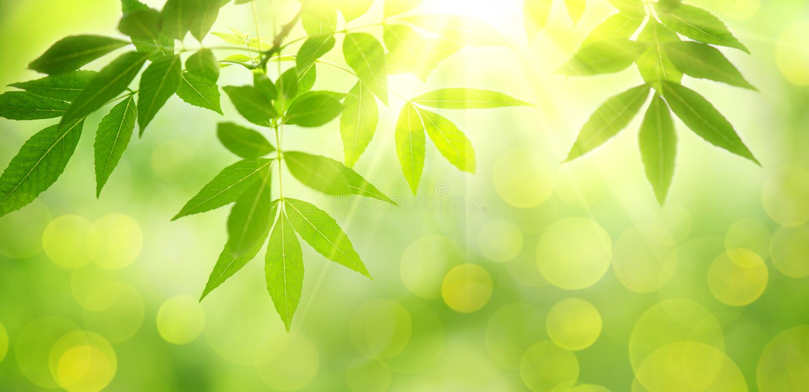 Fresh and green leaves royalty free stock image