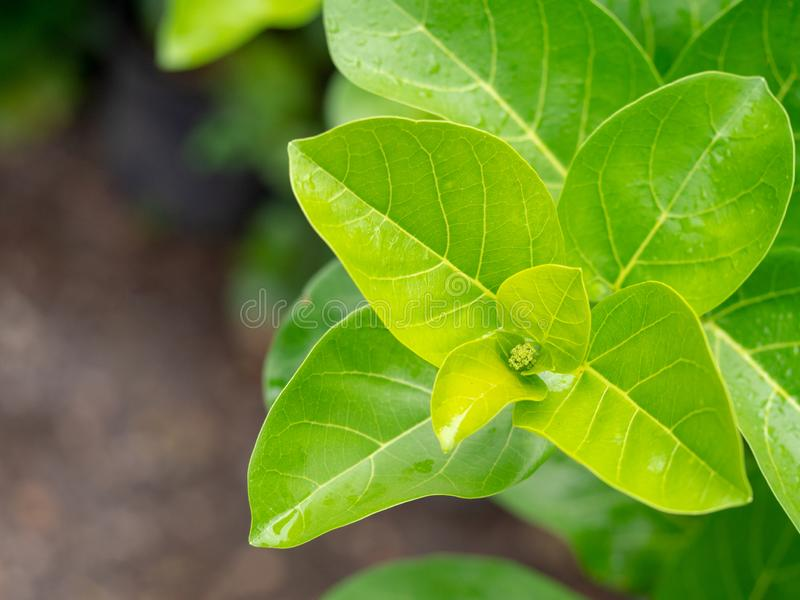 Fresh green leaves are springing in nature. Go save green environment concept royalty free stock image