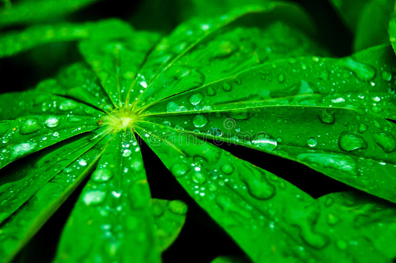 Fresh green leaves with water drops stock image