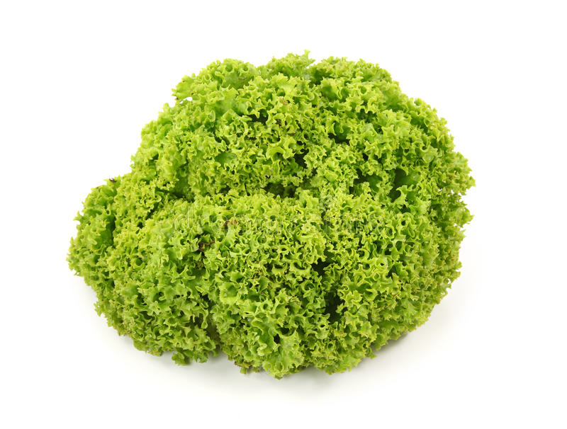 Fresh green lettuc royalty free stock photos