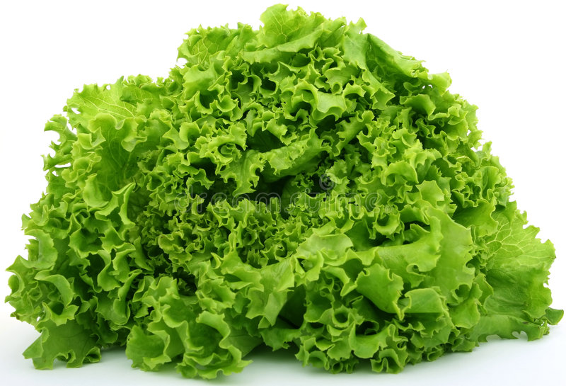 Download Fresh green lettuce food stock photo. Image of good, delicious - 1486886