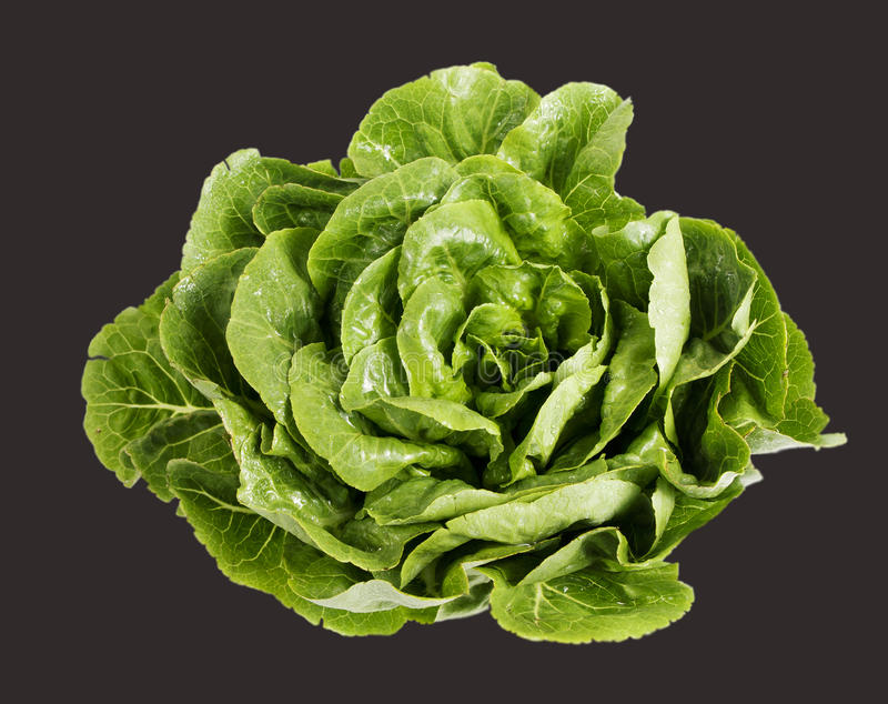 Fresh Green Lettuce isolated royalty free stock photo