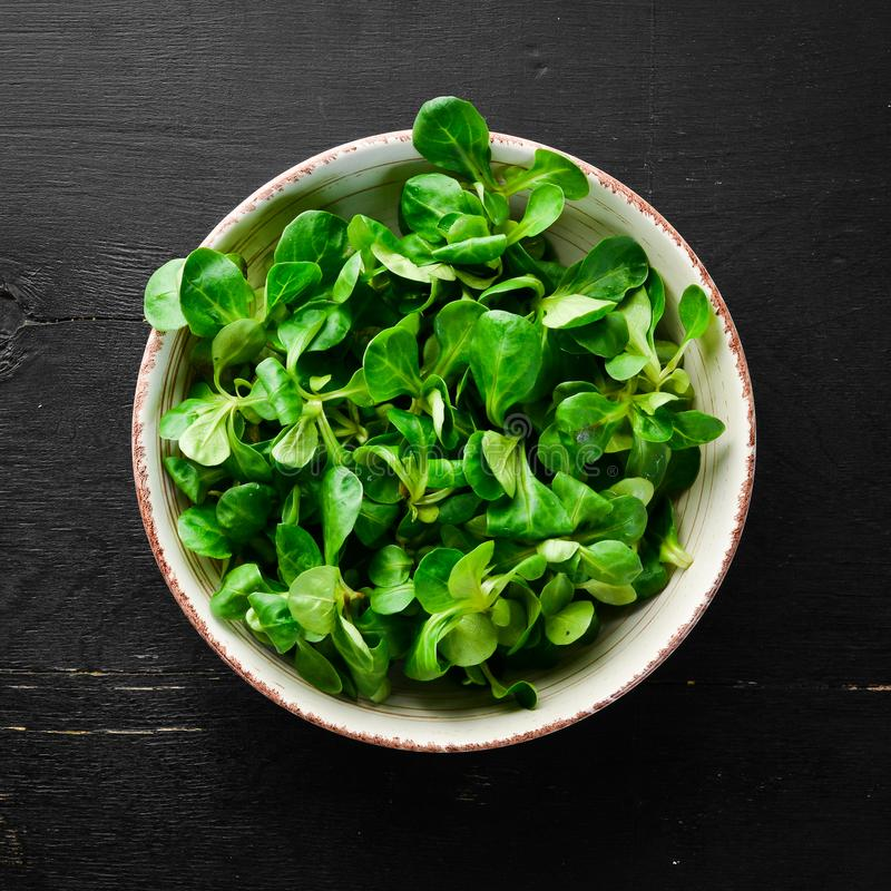 Fresh green lettuce salad in a plate on a wooden background Top view. Free space for your text. Flat lay stock photos