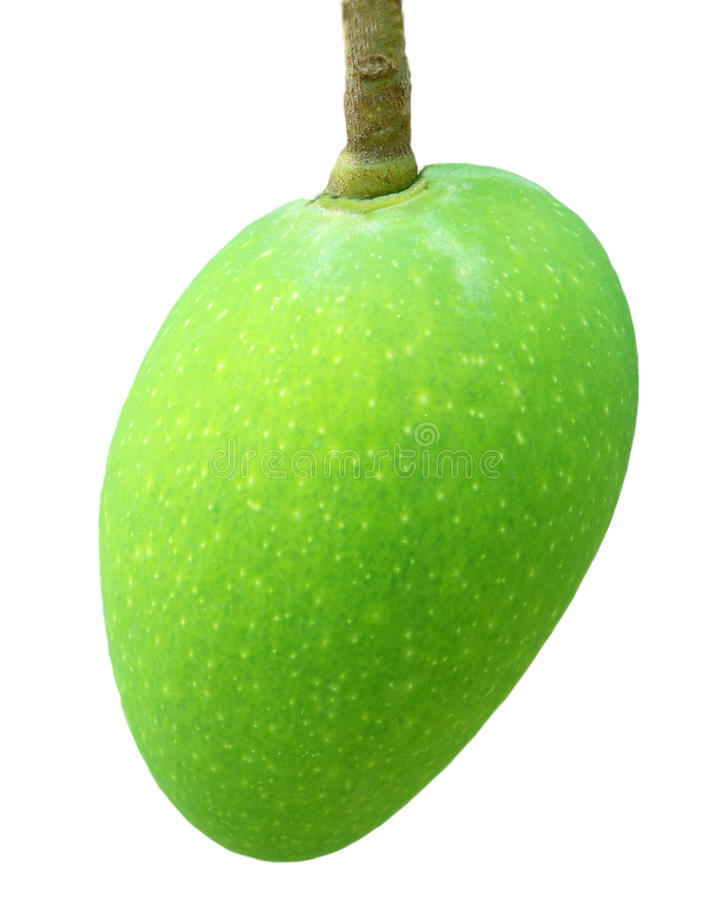 Download Fresh Green Mango Royalty Free Stock Photo - Image: 21737015