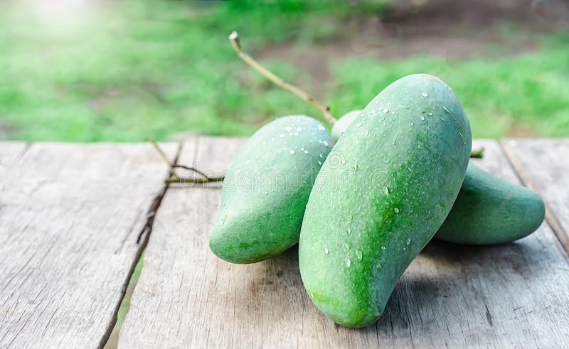 Fresh green mangoes on the wooden table royalty free stock photo