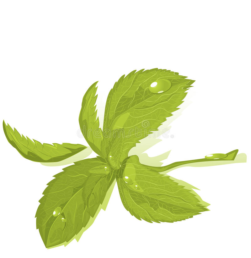 Download Fresh green mint leaves stock illustration. Image of element - 18981459