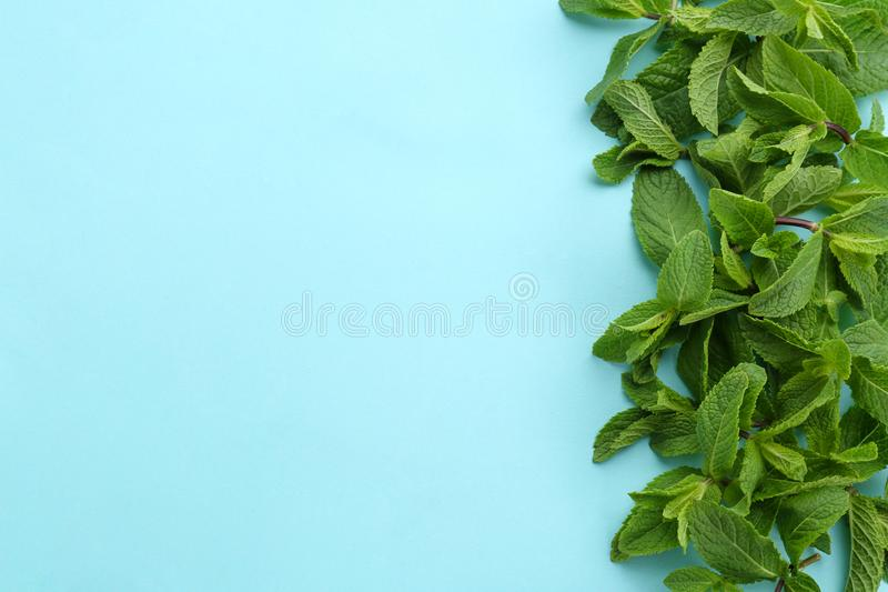 Fresh green mint leaves on color background. Top view stock photos