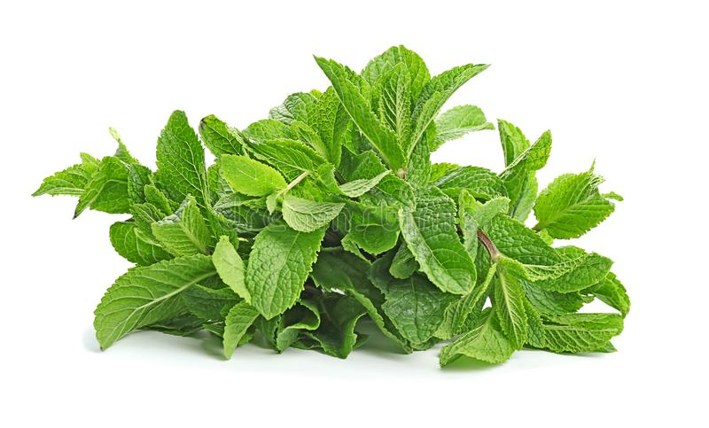 Fresh green mint leaves. On white background royalty free stock photos