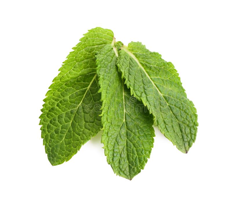 Fresh green mint leaves. On white background royalty free stock image