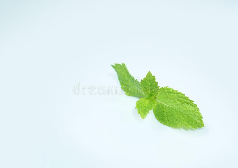 Fresh Green mint leaves isolated on white background stock photos