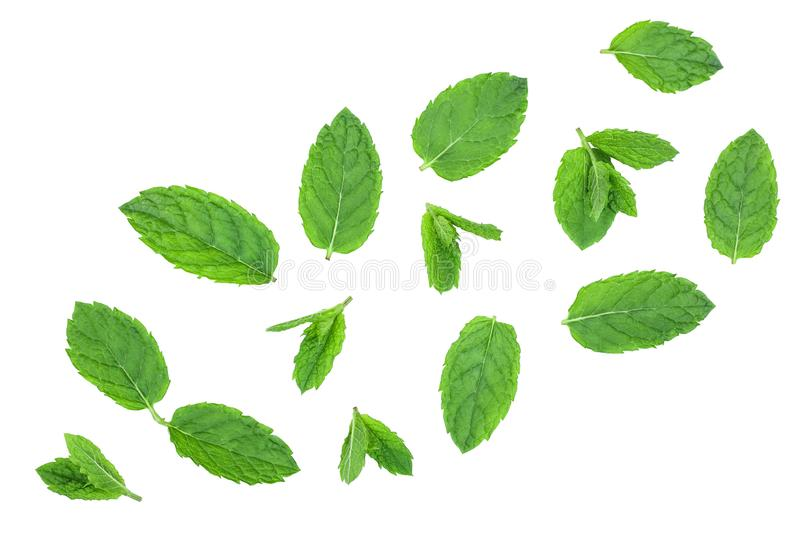 Fresh green mint leaves isolated on white background, top view. Flat lay stock image