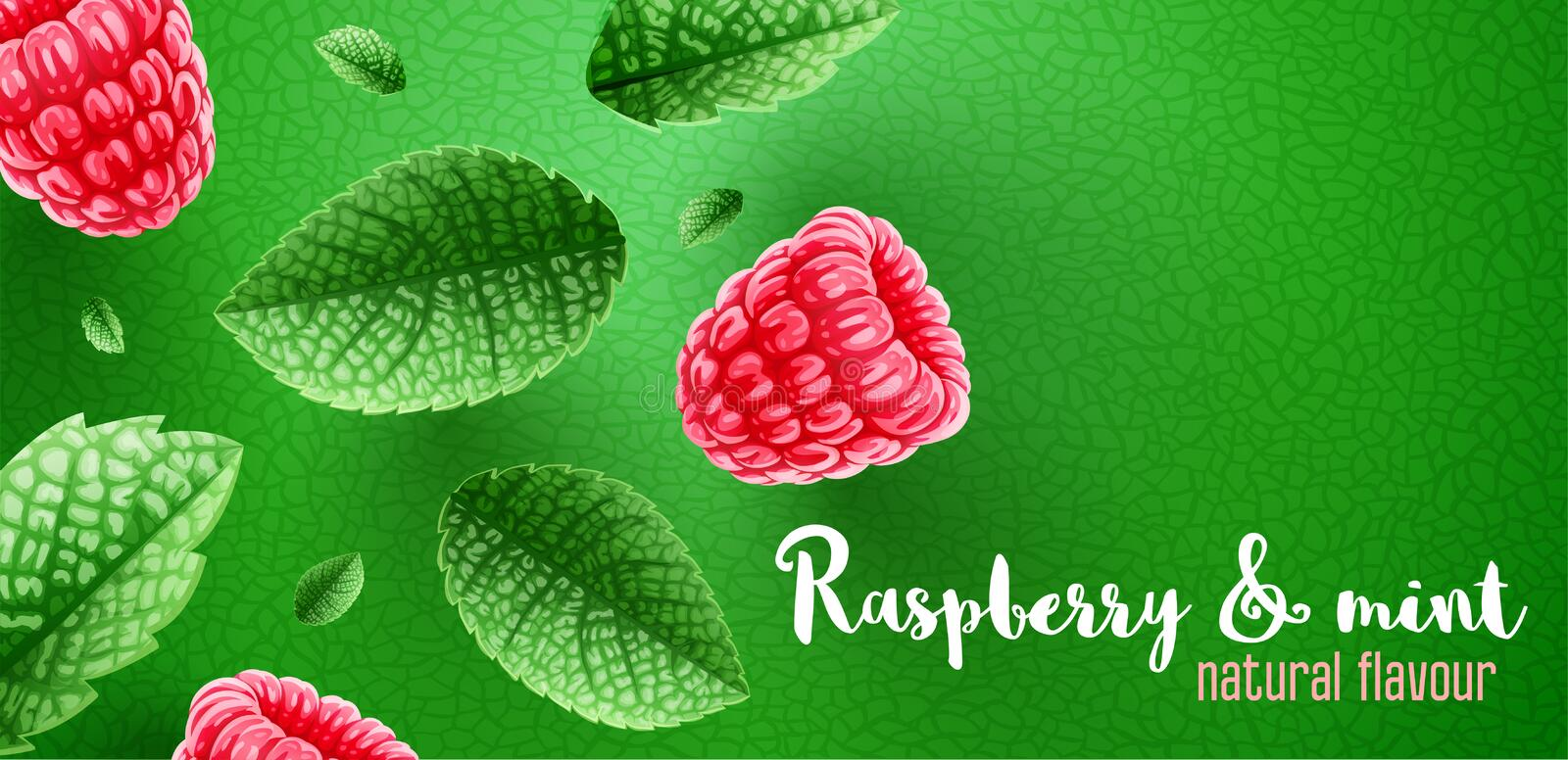 Fresh green mint leaves and raspberry on banner design with copyspace. vector illustration
