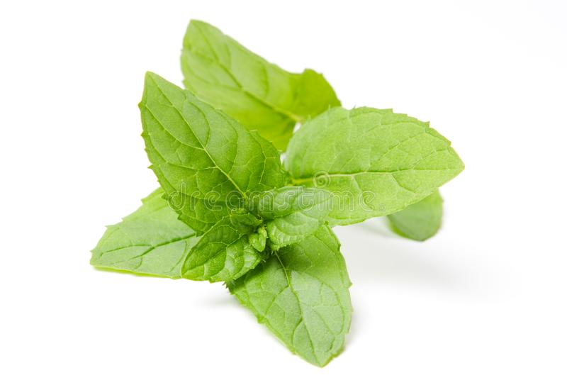 Fresh green mint leaves on white royalty free stock photo