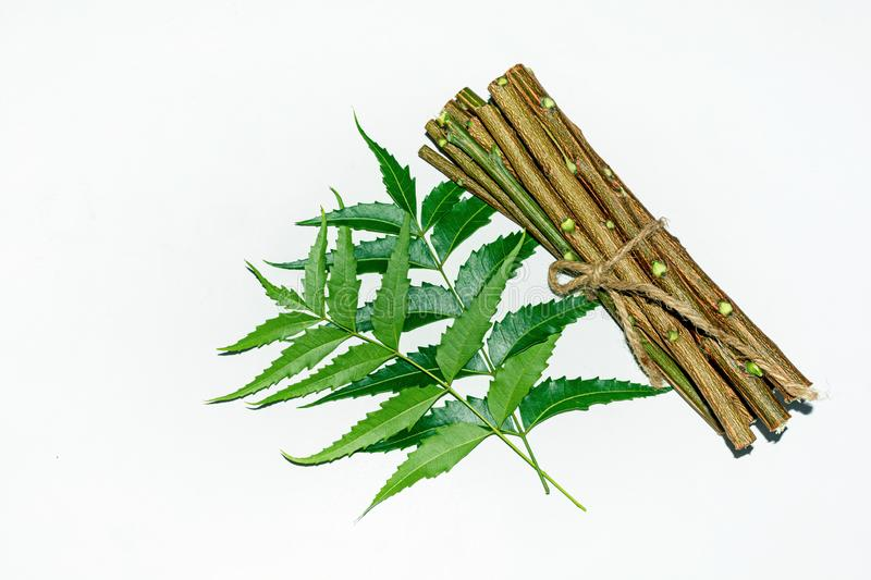 Image result for neem twigs