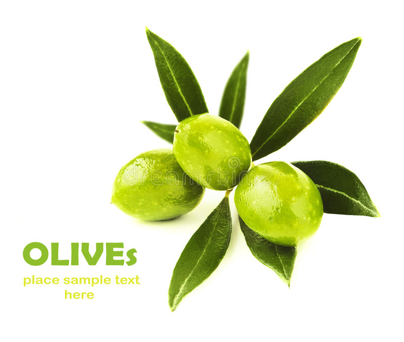 Fresh green olives branch stock photography