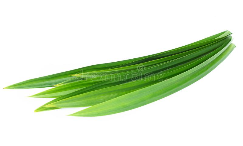 Fresh green pandan leaves isolated on white background. Fresh green pandan leaves isolated stock photos