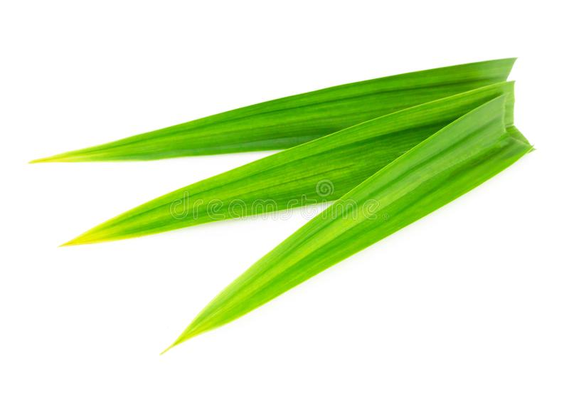 Fresh green pandan leaves isolated on white background. Fresh green pandan leaves isolated stock photography