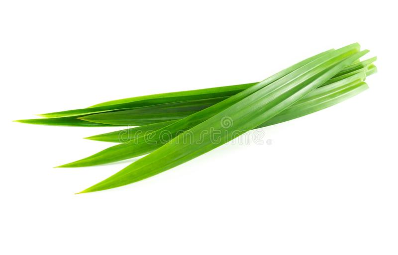 Fresh green pandan leaves isolated on white background. Fresh green pandan leaves isolated on white royalty free stock image