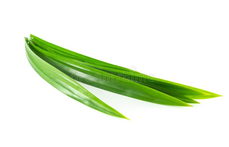 Fresh green pandan leaves isolated on white background. Fresh green pandan leaves isolated on white royalty free stock photography