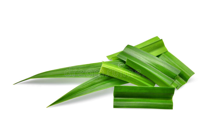 Fresh green pandan leaves isolated on white. Background stock photo