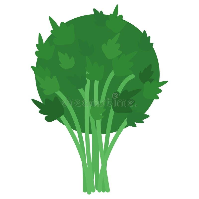 Fresh green parsley icon, vector illustration royalty free illustration