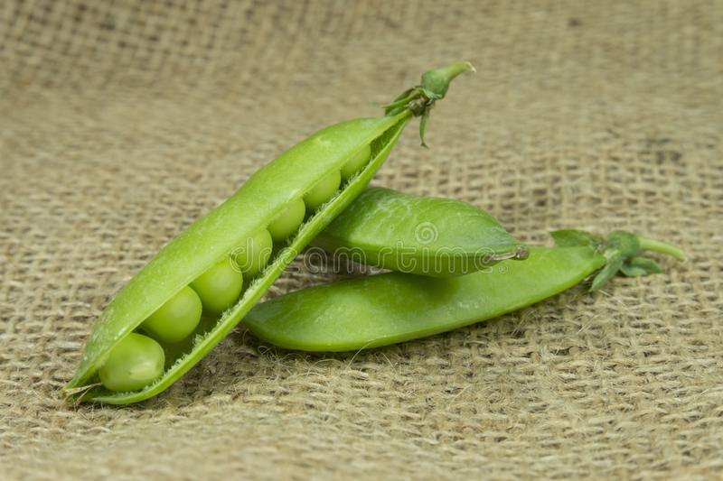 Fresh green pea pods on brown jute background royalty free stock photography