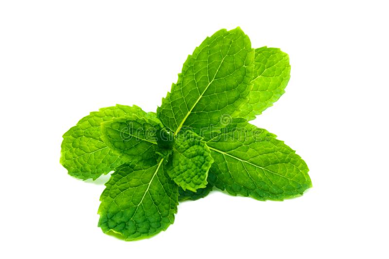Fresh and green peppermint, spearmint leaves isolated on the white background. close up mint stock photo