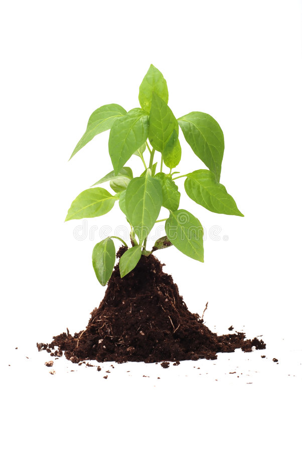 Download Fresh Green Plant For Better Environment Stock Photo - Image: 6095752