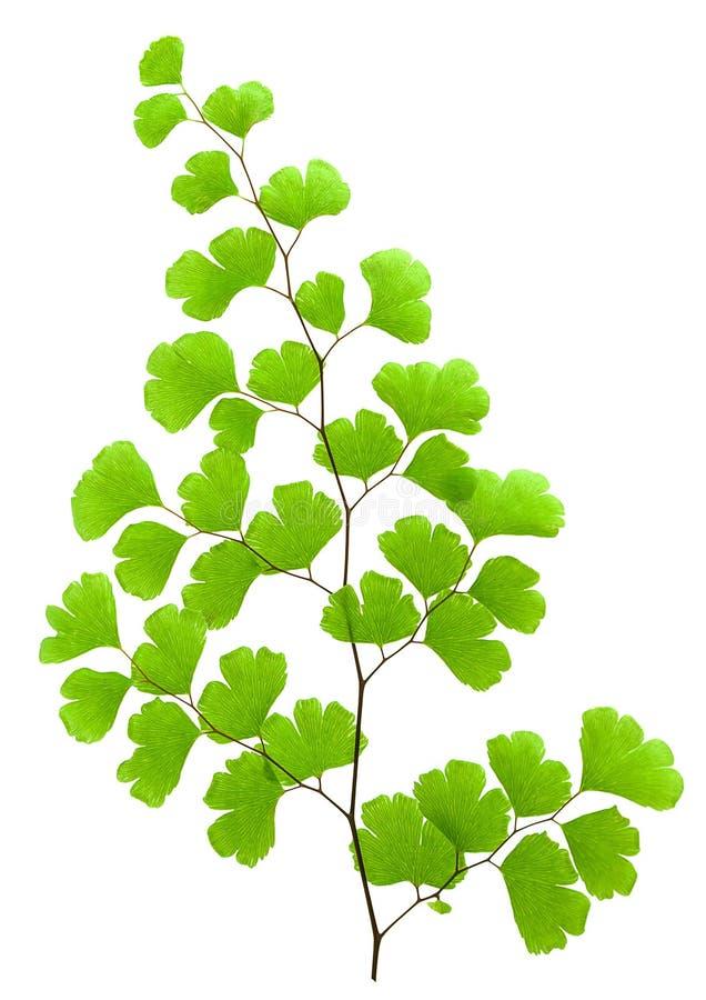 Fresh green plant stock image
