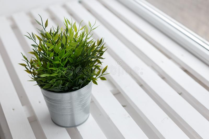 Fresh green plant in a small decorative metal bucket on a white wooden windowsill with a copyspace for a text stock photography