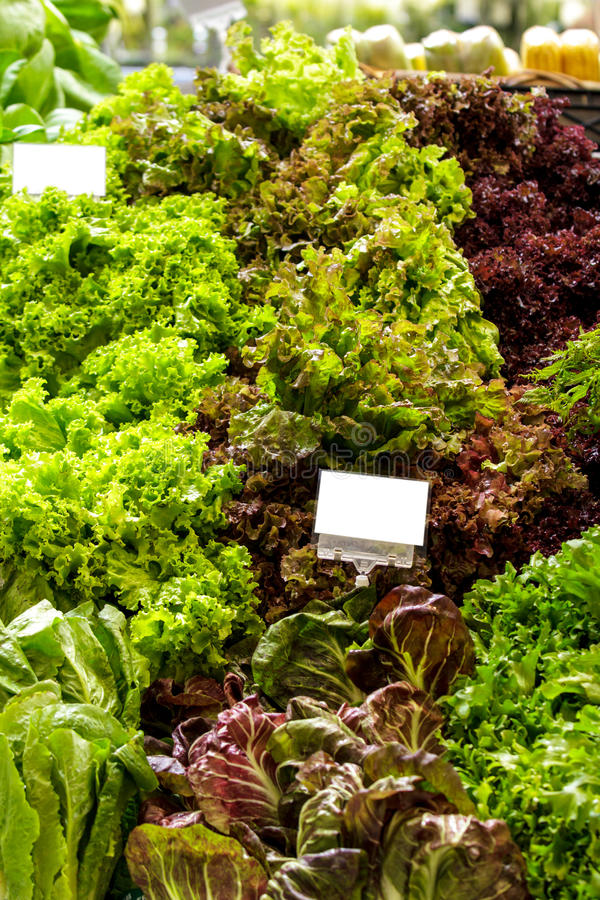 Fresh green and red kale at supermarket display royalty free stock photography