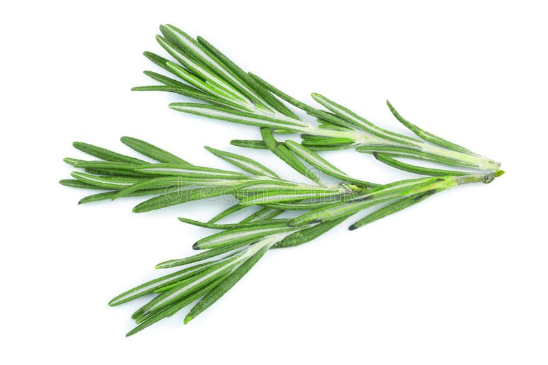 Fresh green rosemary isolated on a white background. Top view. Flat lay royalty free stock photo