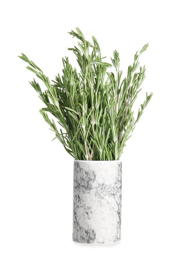 Fresh green rosemary in vase stock image