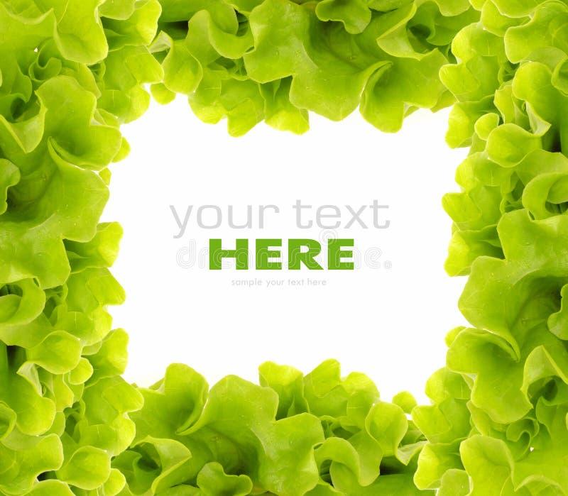 Fresh Green Salad frame. Beautiful fresh green salad frame royalty free stock images