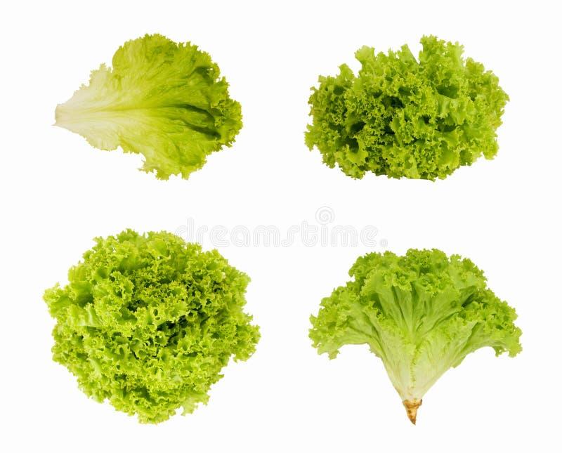 Fresh green salad isolated on white background. royalty free stock photos