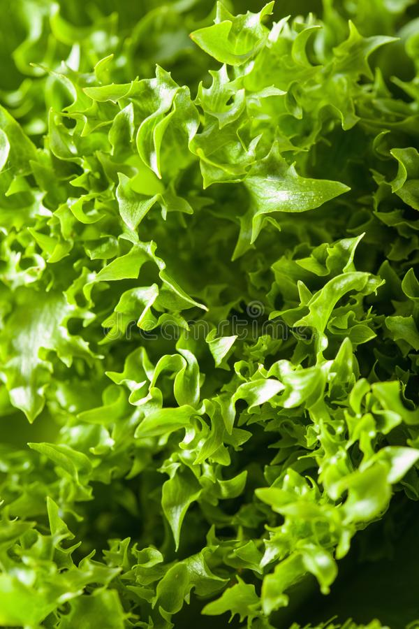 Fresh green salad leaf background royalty free stock images