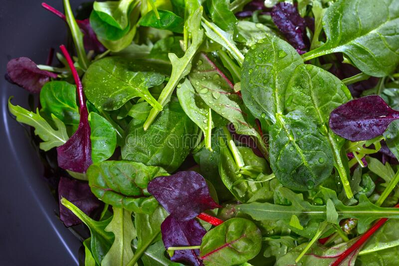 Fresh green salad leaves, a close-up. A diet. A notion of healthy meals stock photos