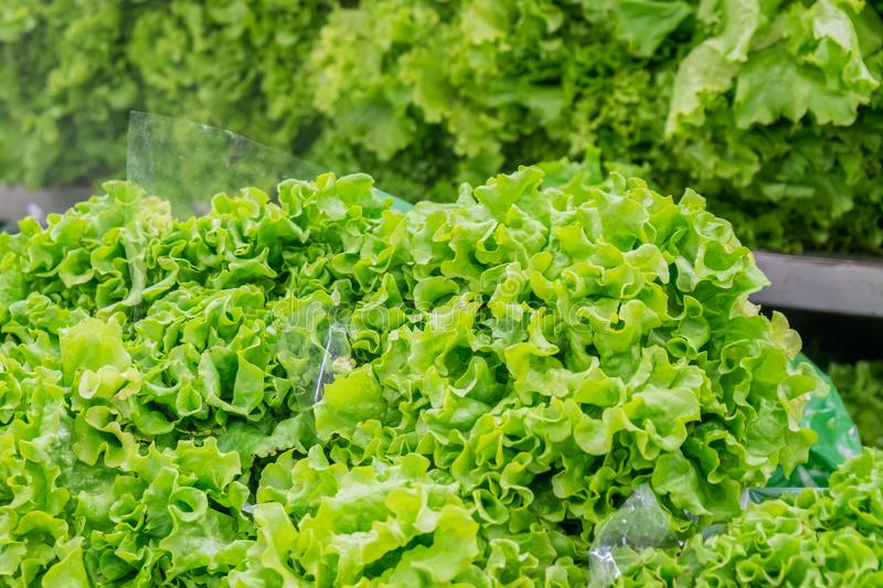 Fresh green salad leaves in a market, healty food royalty free stock photography