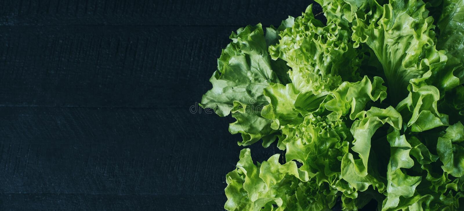 Fresh green salad lettuce leaves isolated on a dark background of the aged wooden boards vintage horizontal top view royalty free stock photography
