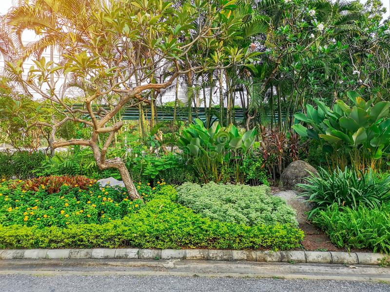 Fresh green shrubs and colorful bush in a garden, trees on background, good care maintenance landscapes in public park. Under morning sunlight stock photography