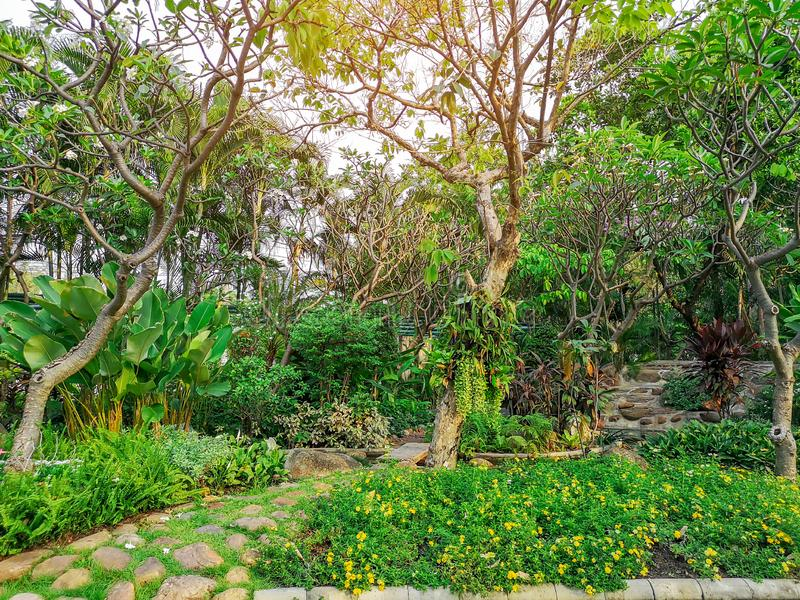 Fresh green shrubs and colorful bush in a garden, trees on background, good care maintenance landscapes in public park  under. Morning sunlight royalty free stock images